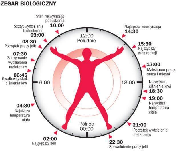 zegar biologiczny.jpg